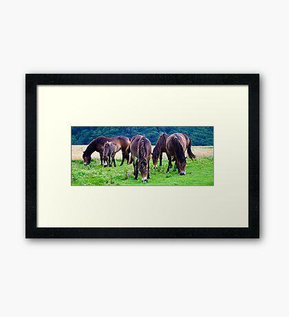The Ponies Framed Print