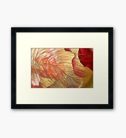 Petal's Womb Framed Print