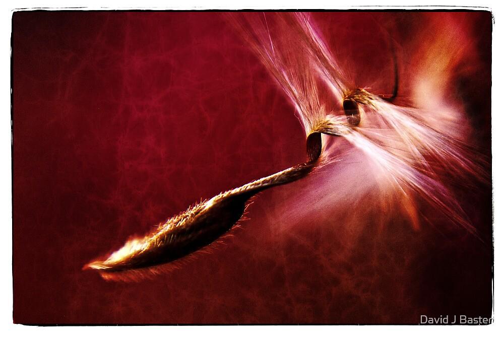 Thistle pod by David J Baster