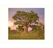 Boab Tree facing sunset. Art Print