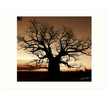 Boab Tree at sunset with a bushfire in the background. Art Print