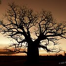 Boab Tree at sunset with a bushfire in the background. by Mary Jane Foster