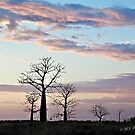 Boab trees at sunrise, Derby marshlands. Kimberley, Western Australia. by Mary Jane Foster