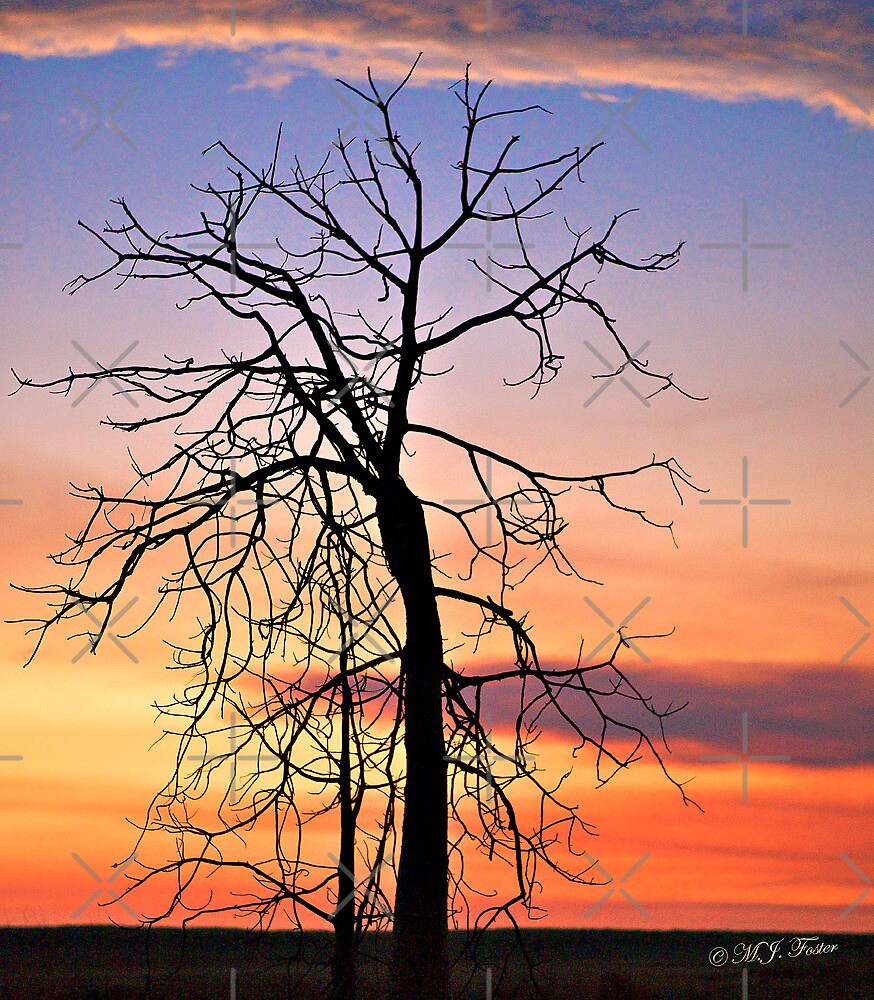 Blue Hour,Solitary Boab at sunset. Derby, West Kimberley, Western Australia. by Mary Jane Foster