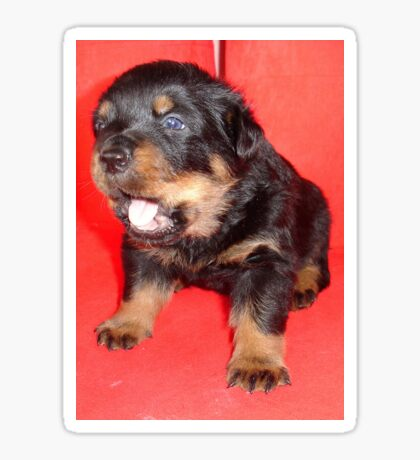 Rottweiler Puppy Howling For Attention Sticker