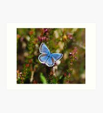 silver studded blue  Art Print