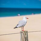Seagull in charge by Kim Austin