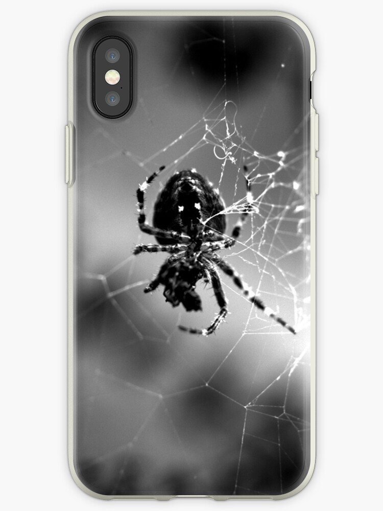 spider1 by eric abrahamowicz
