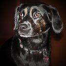 Brown Eyed Princess by Ticker