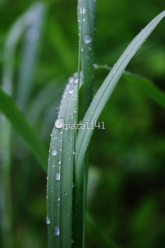 Grass by blaza1141