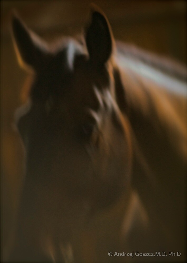 Cavallo Grand Prix Portrait. by Brown Sugar. by © Andrzej Goszcz,M.D. Ph.D
