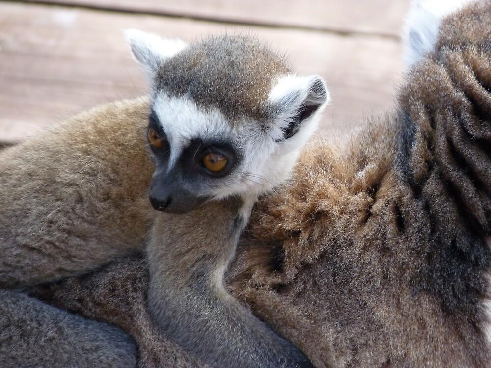 Lemur by Jim82