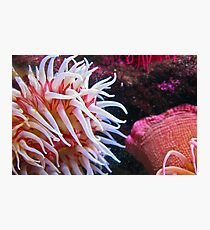 Coloured Photographic Print