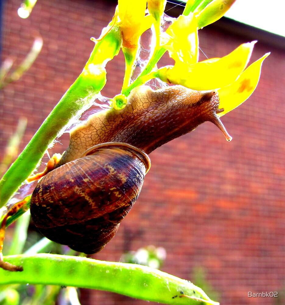 Snail  by Barnbk02