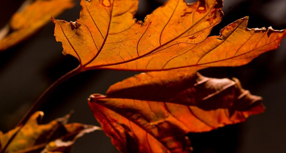Season's change by Harv Churchill