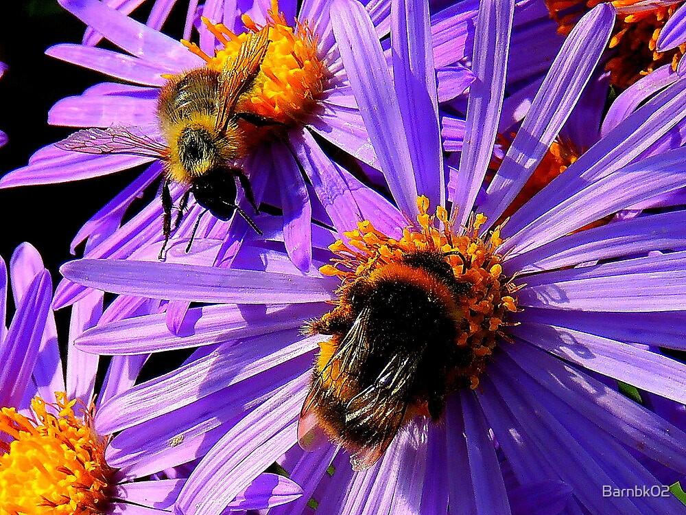 September Flower by Barnbk02