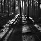 Light and Shadows by Irina Chuckowree