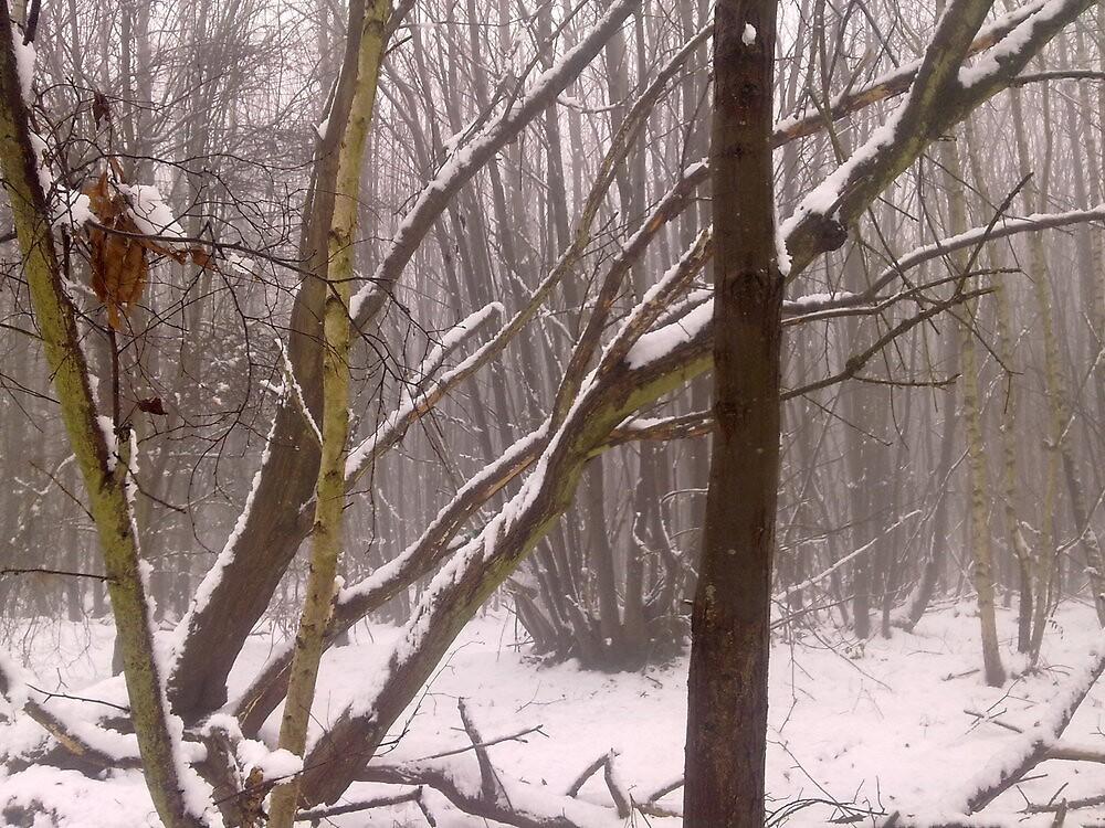 Kings Wood by KentPics