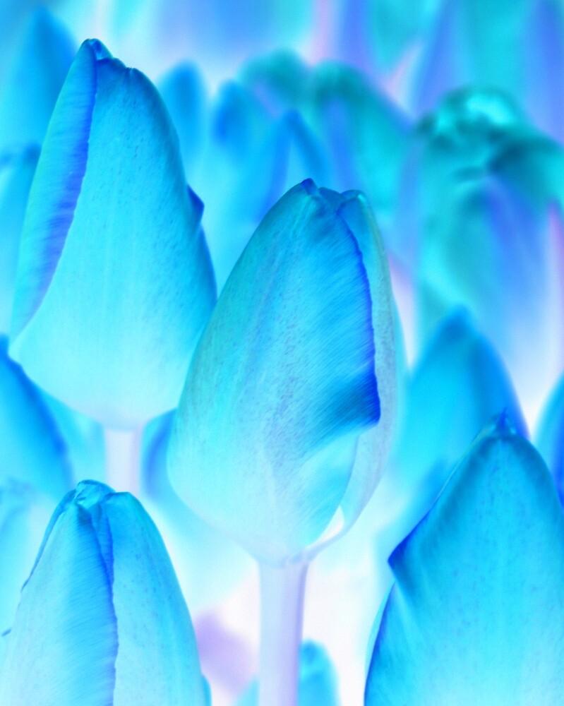 Tulips in Blue by stevefinn77