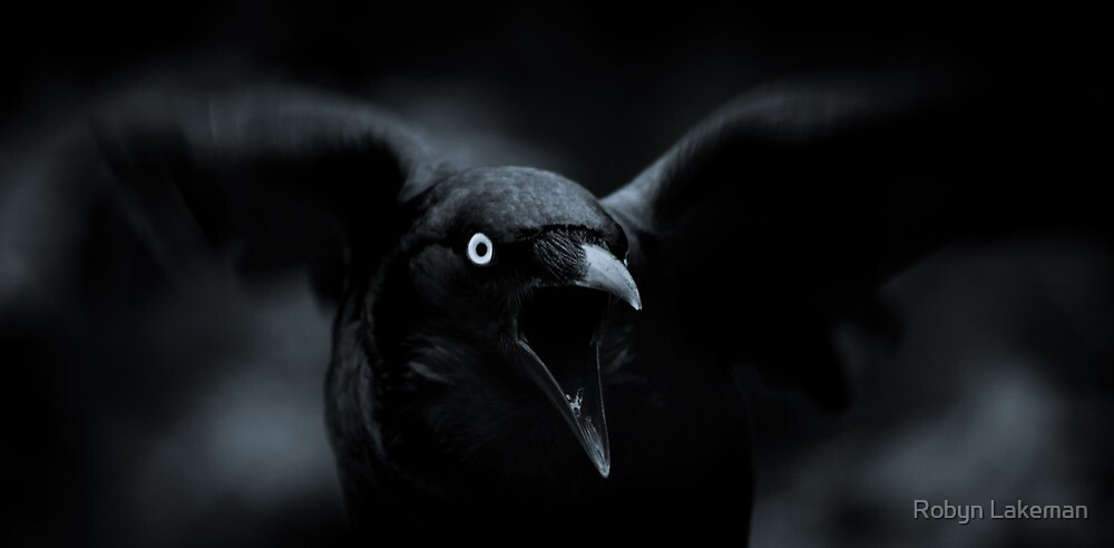 Hungry crow by Robyn Lakeman
