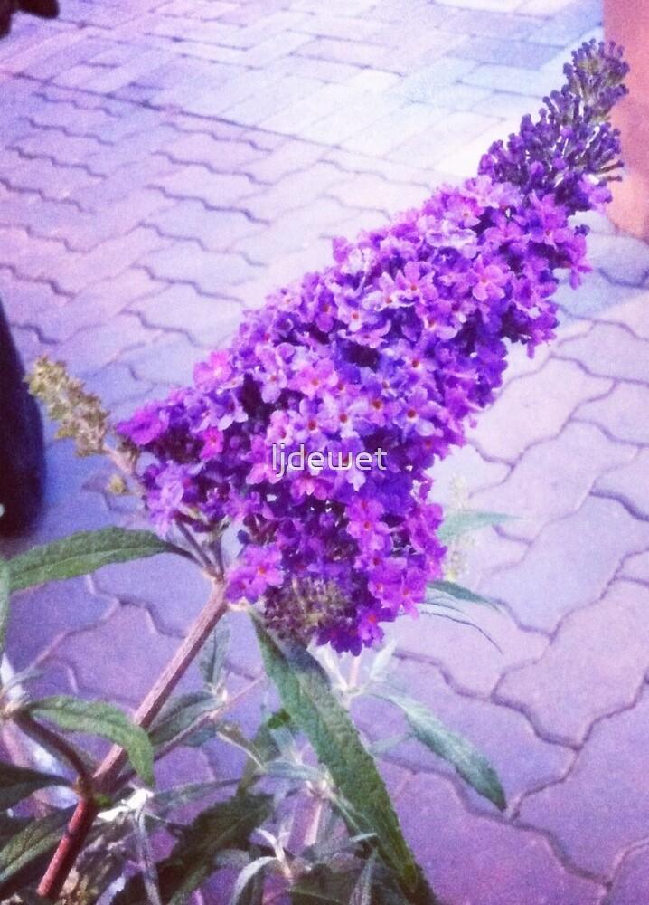 butterfly flower by ljdewet