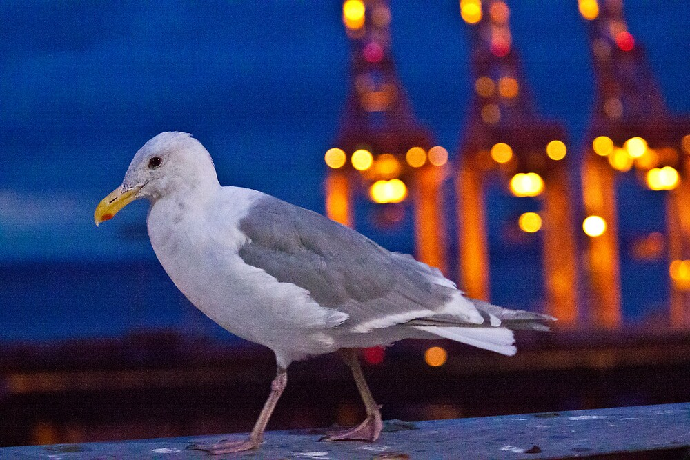 Seagull on Seattle Mariners Stadium by Keegan McCarthy