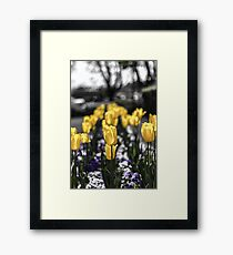 Wall of Tulips Framed Print