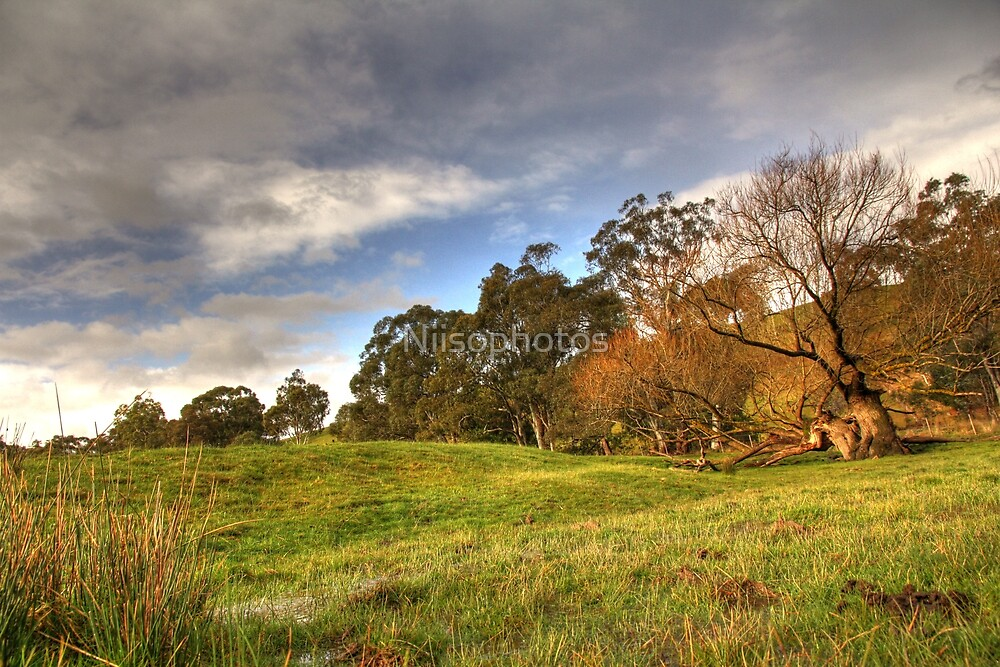 The tree of the fields   by Niisophotos