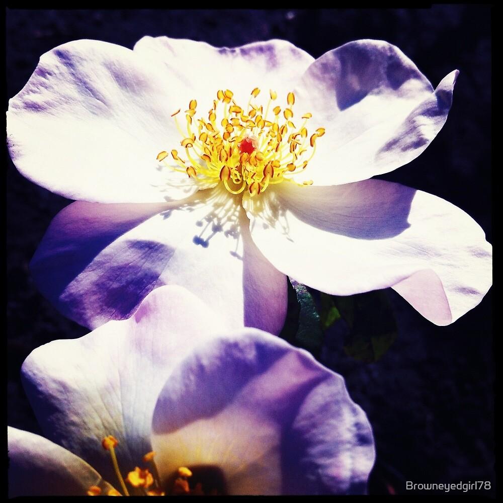 Flower in September by Browneyedgirl78
