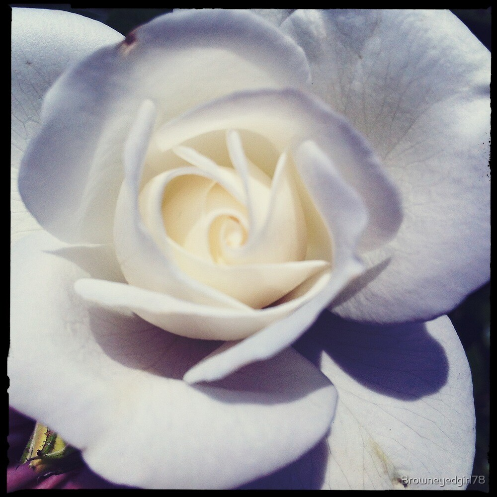 The White Rose by Browneyedgirl78
