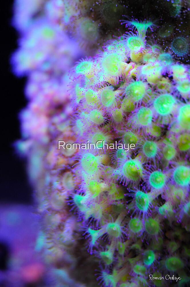 Colors underwater by RomainChalaye