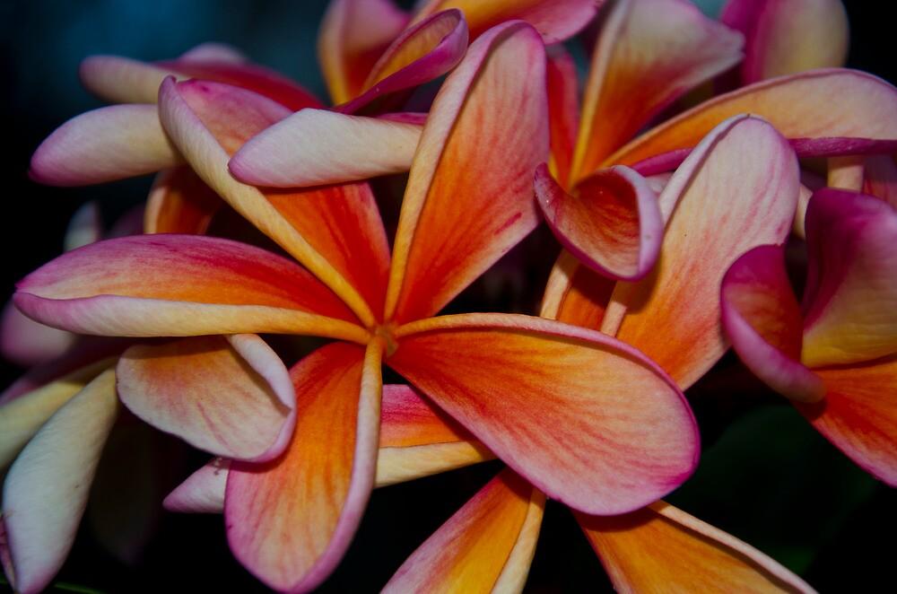 Flowers by Johanne Platt
