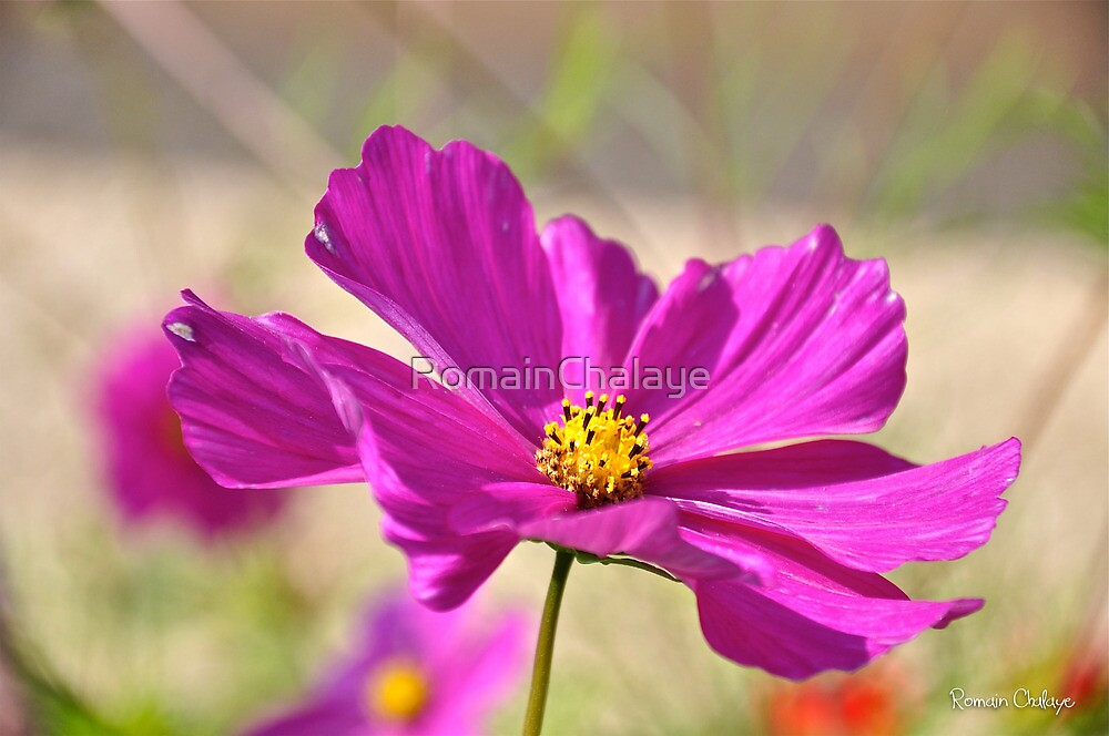 Flower by RomainChalaye