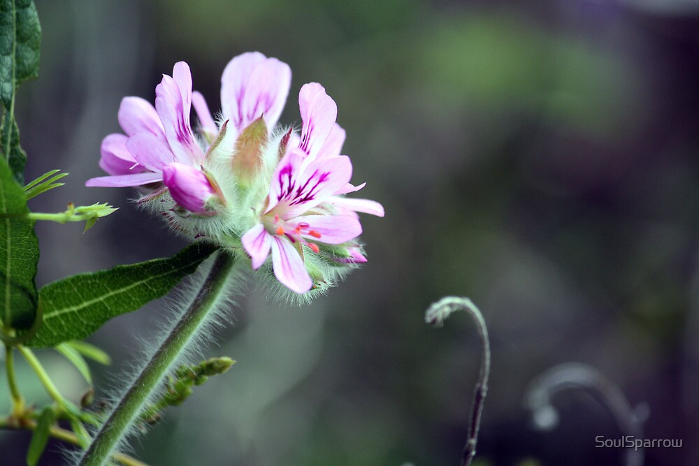 Lilac Wildflower by SoulSparrow