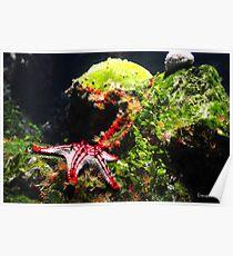 Starfish land Poster