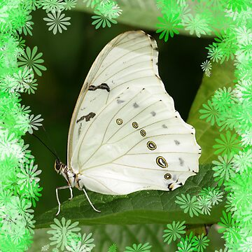 White Papilio With Flowers by Papilio