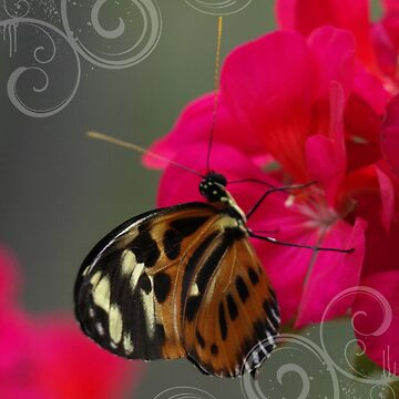 Orange Papilio On Flowers by Papilio