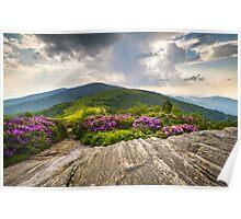 Jane Bald in Bloom - Roan Mountain Highlands Landscape Poster