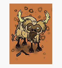 Shaved Beefalo, don't starve Photographic Print