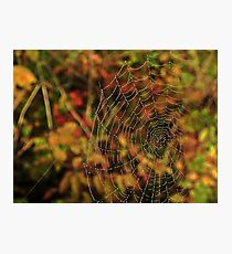 Nature Weaves Together Photographic Print
