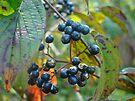 Autumn Viburnum Berries Series #2 by MotherNature