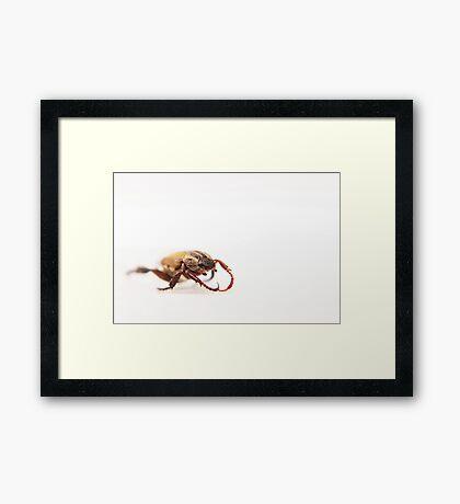 Beetle On White Framed Print
