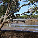 Low tide at the creek ... by gail woodbury