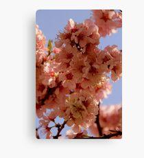 Floriade Blossom Canvas Print