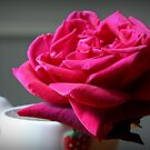 Red Rose by Phill Sacre