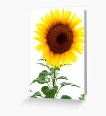 Luminescent Sunflower Greeting Card