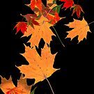 Colorful autumn maple leaf design  by Marianne Campolongo