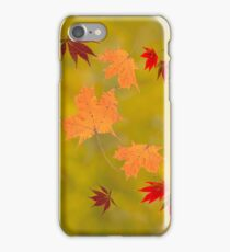 Falling red gold autumn leaves sugar and Japanese maple iPhone Case/Skin