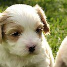 beautifull puppy by Jemma Richards