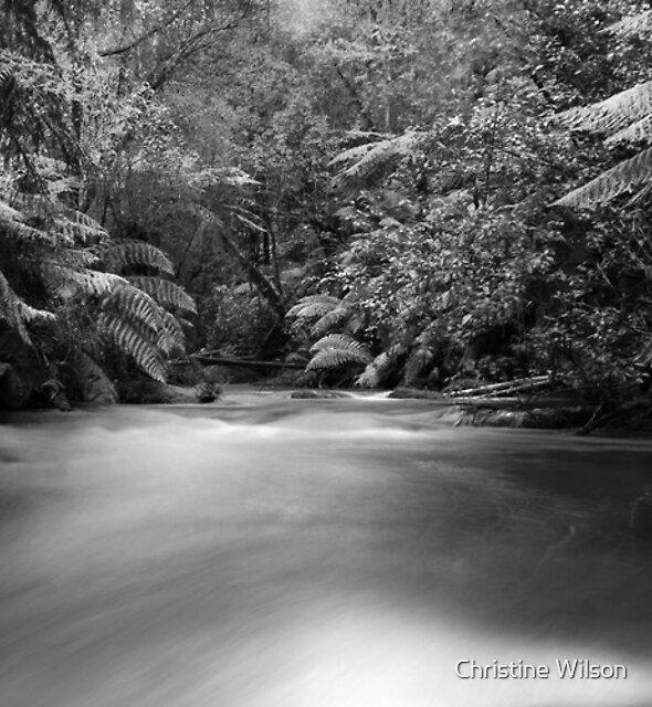 Tooronga Falls by Christine Wilson